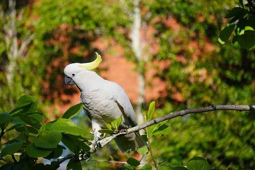 bird white small beaked bird parrot