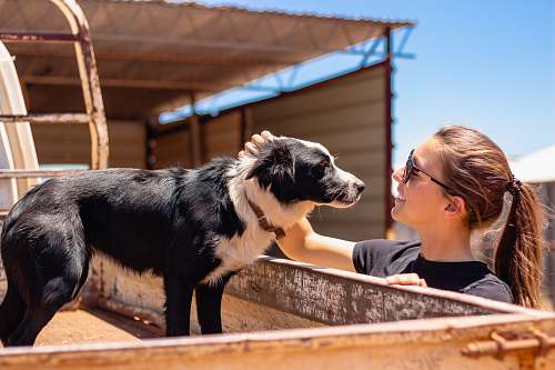 mammal woman facing on short-coated black dog outdoor dog
