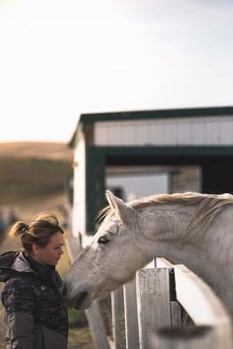 horse woman near white horse mammal