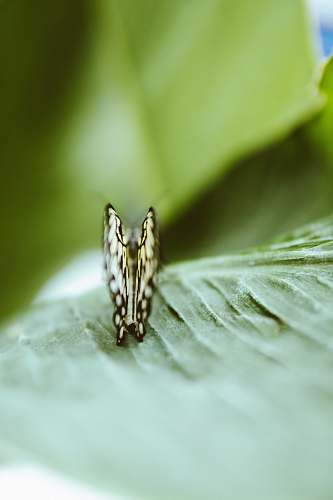 insect yellow and black butterfly on leaf invertebrate