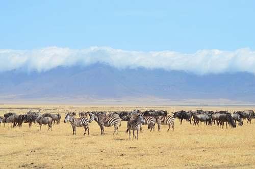 zebra zebra on desert wildlife