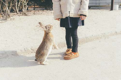 footwear rabbit about to stand in front of toddler shoe