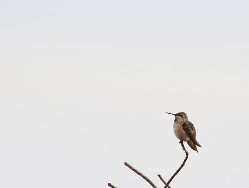 animal bird perched on brancg bee eater