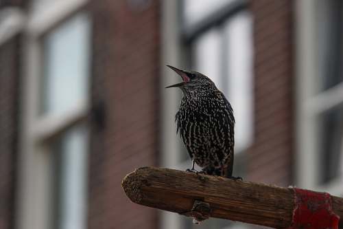 animal small brown perching on wood netherlands