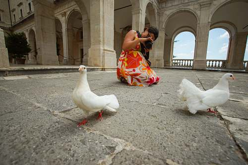 animal woman taking photo of two doves chicken