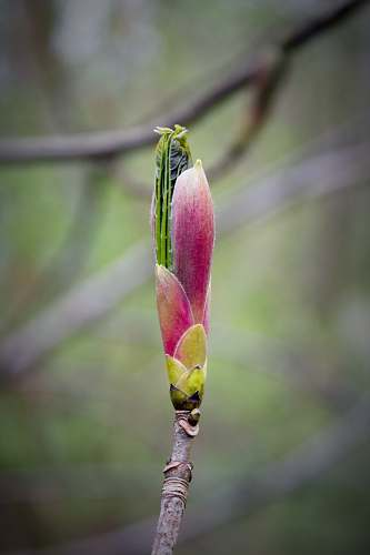 plant pink flower bud flower
