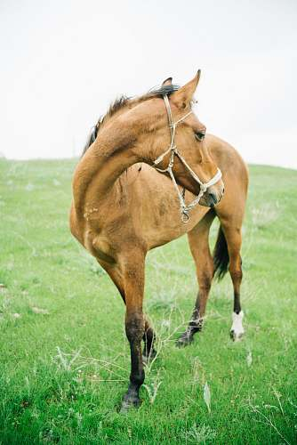 animal brown horse on field horse