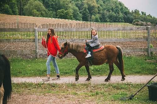 animal girl riding brown horse horse