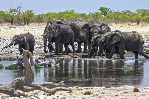 animal group of elephants elephant