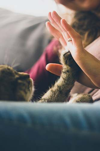 cat tabby cat touching person's palm pet