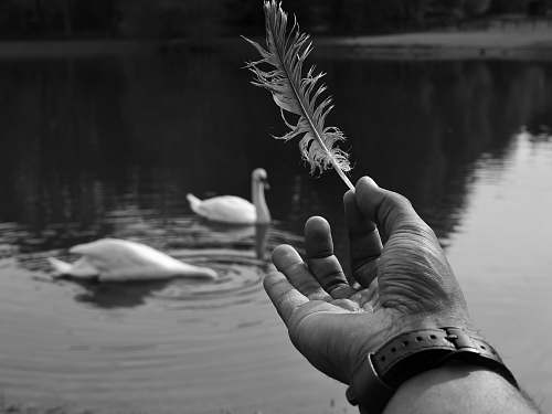 water grayscale photography of person holding feather animal