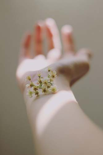 cherry blossom selective focus photography of white clustered flowers on left human hand flora