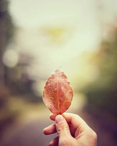 flora tilt shift lens photo of person holding dried leaf food