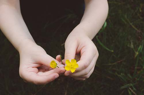 human person holding yellow flowers person