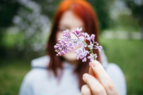 blossom macro shot photo of woman holding purple flower standing outside moscow