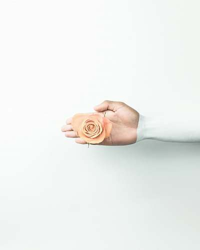 rose person holding brown flower london