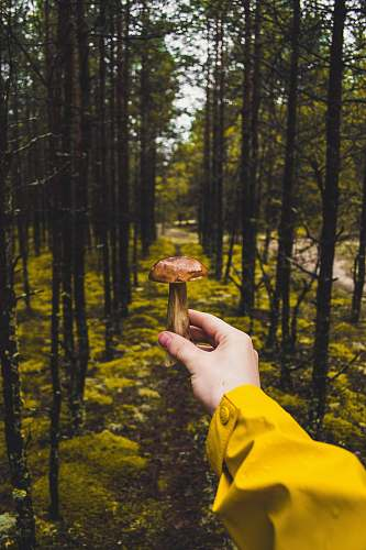 nature person holding brown mushroom tree