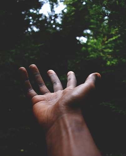 finger man standing facing green trees reach