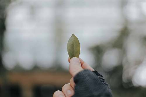 leaf person holding brown leaf hold