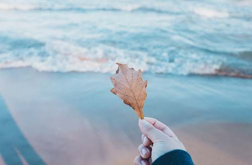 leaf person holding dried leaf near body of water hold