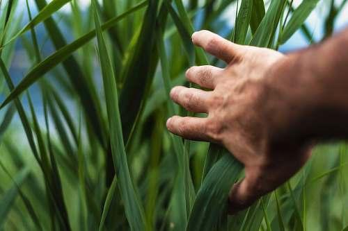 grass person holding green grass green