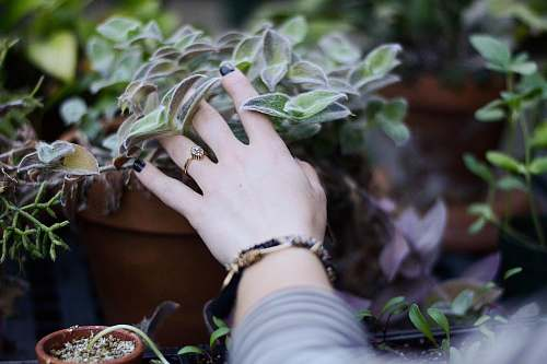 plant person holding green succulent plant ring