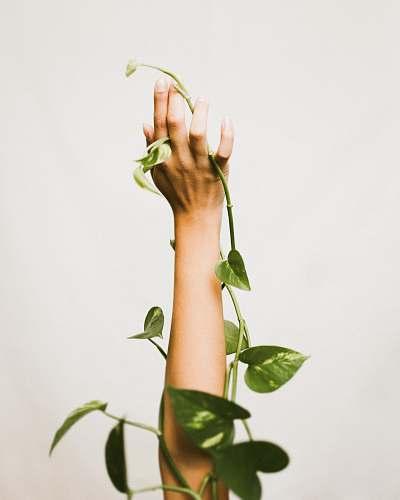 plant person holding ivy plant wrist