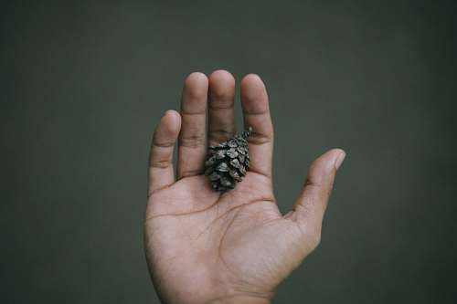 finger person holding pine cone indonesia