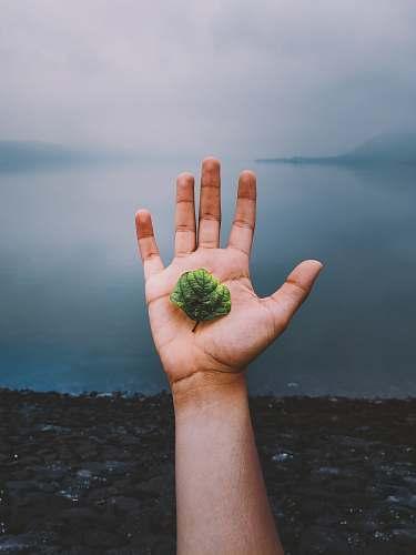 finger person holding plant leaf leaf