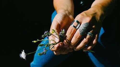 ring person holding white flowering plant flower