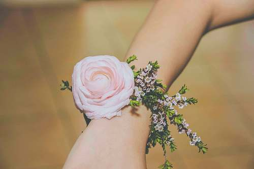 wrist person wearing pink corsage flower
