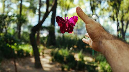 arm person's hand about to catch a pink butterfly toy at daytime butterfly