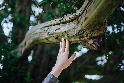 tree person's hand touching tree trunk nature