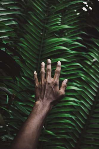 maldives person's right hand plant