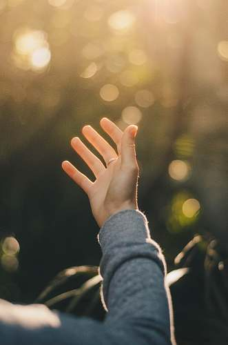 human shallow focus photography of person raising hand people