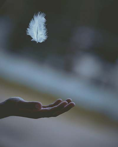 feather shallow focus photography of white feather dropping in person's hand grey