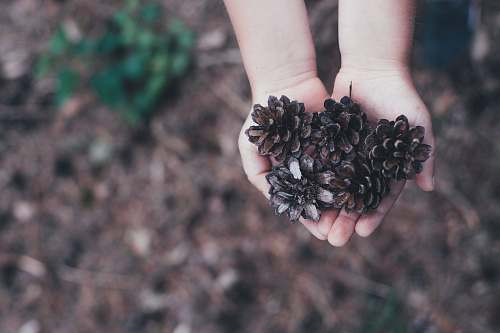 nature children holding brown conifer cones during daytime kid