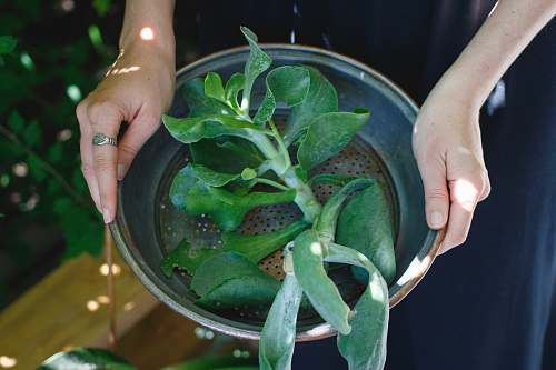 woman person holding round gray pot with green leaf plant inside plant