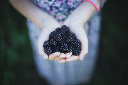 food woman holding blue berries taken at daytime blackberries