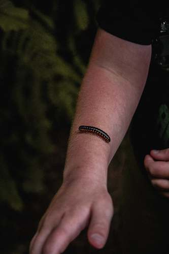 person black centipede on man's arn arm