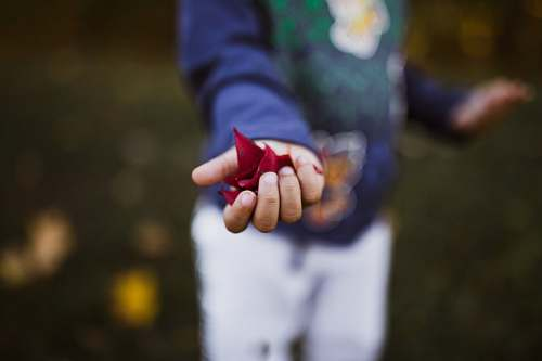 person boy holding red petals hand