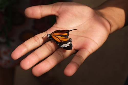person brown butterfly on person's palm siem reap