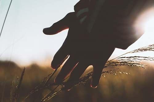person left person's hand plant