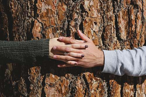 hand man and woman hand connecting on tree trunk tree