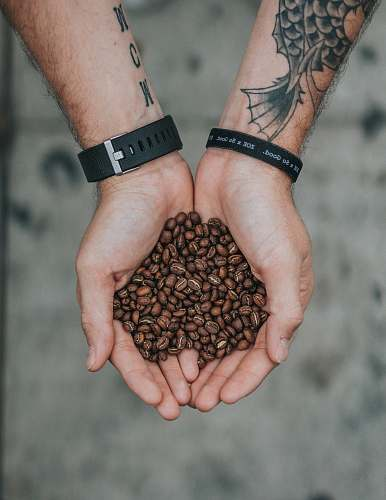 person person holding brown coffee beans selective focus photography coffee