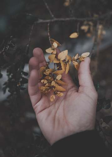 person person holding brown leaves people