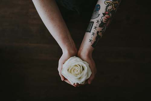 person person holding white rose people