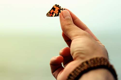 person red and black butterfly hand