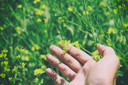 people shallow focus photography of person holding yellow flower plant person