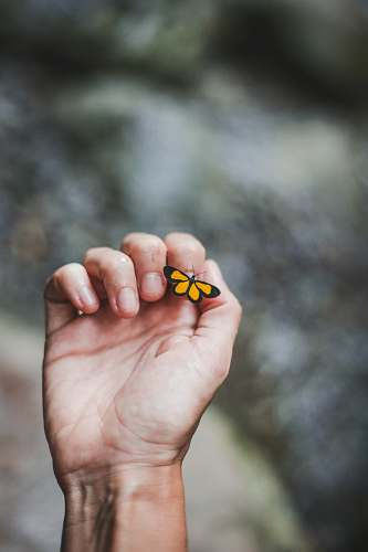person yellow butterfly on person's index finger finger